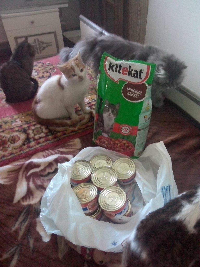 В Мариуполе женщина держит в доме 18 кошек (ФОТО), фото-9