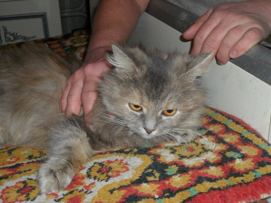 В Мариуполе женщина держит в доме 18 кошек (ФОТО), фото-6