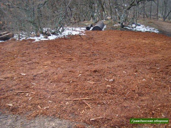Новую дачу Януковича в крымском заповеднике обнесли забором и вырубили рядом деревья (ФОТО), фото-3