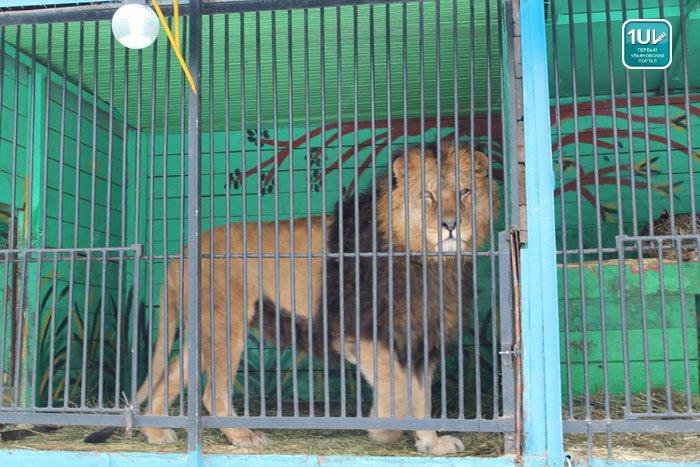 зоопарк2014 (3)
