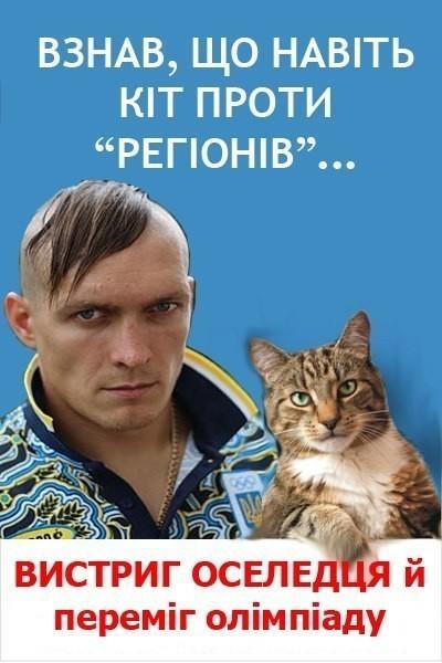 На Днепропетровщине совершено вооруженное покушение на автора мейнстрима  «Переписала хату на кота», фото-4