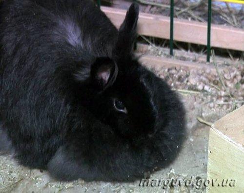 В Мариуполе парочка влюбленных похитила из зоомагазина кролика Ваську (ФОТО), фото-2