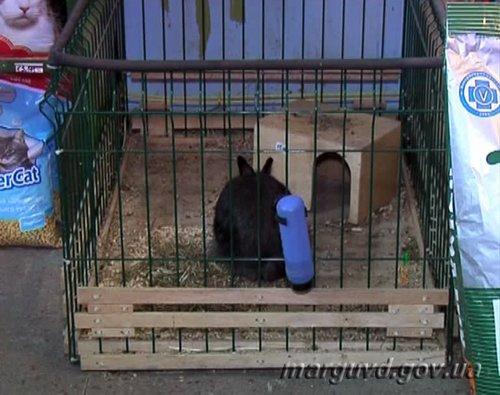 В Мариуполе парочка влюбленных похитила из зоомагазина кролика Ваську (ФОТО), фото-1