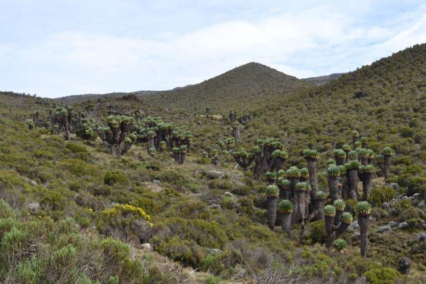 Мариупольцы вошли в африканские облака и любовались Килиманджаро с горы-зебры (ФОТОРЕПОРТАЖ), фото-14