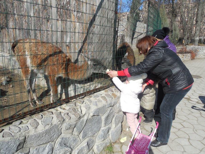 Киев блокирует перечисления в харьковский зоопарк: животные останутся без еды и света, фото-4