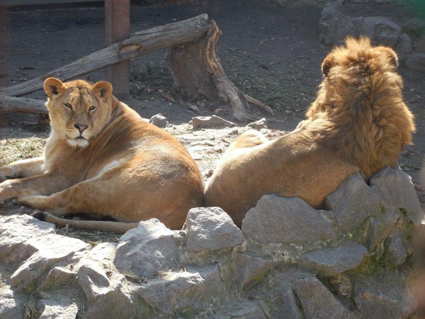 Киев блокирует перечисления в харьковский зоопарк: животные останутся без еды и света, фото-2