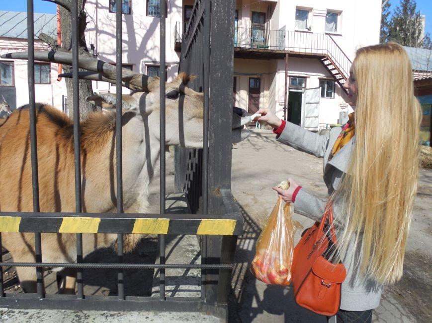 Киев блокирует перечисления в харьковский зоопарк: животные останутся без еды и света, фото-5