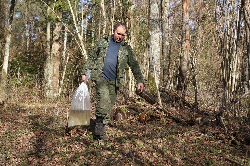 Фоторепортаж: как в Гродненской области приступили к заготовке березового сока (фото) - фото 1