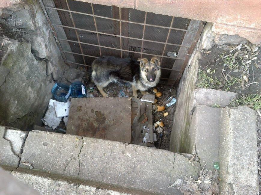 В Мариуполе собака, провалившаяся в яму, срочно нуждается в помощи (ФОТО), фото-1