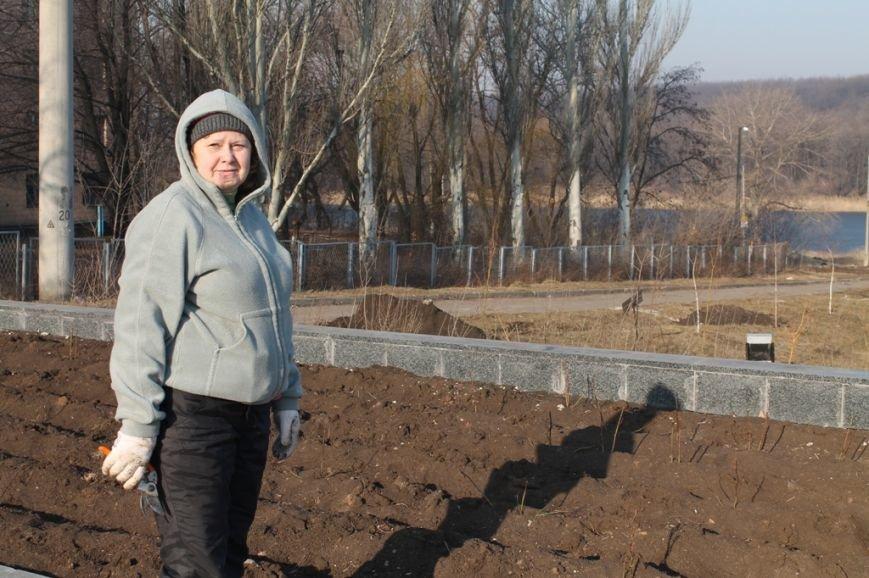 В Артемовске на новой аллее воруют розы, фото-2