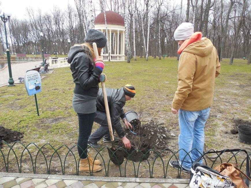 Make tree's, not war: в парке Горького высадили магнолии и миндаль, фото-4