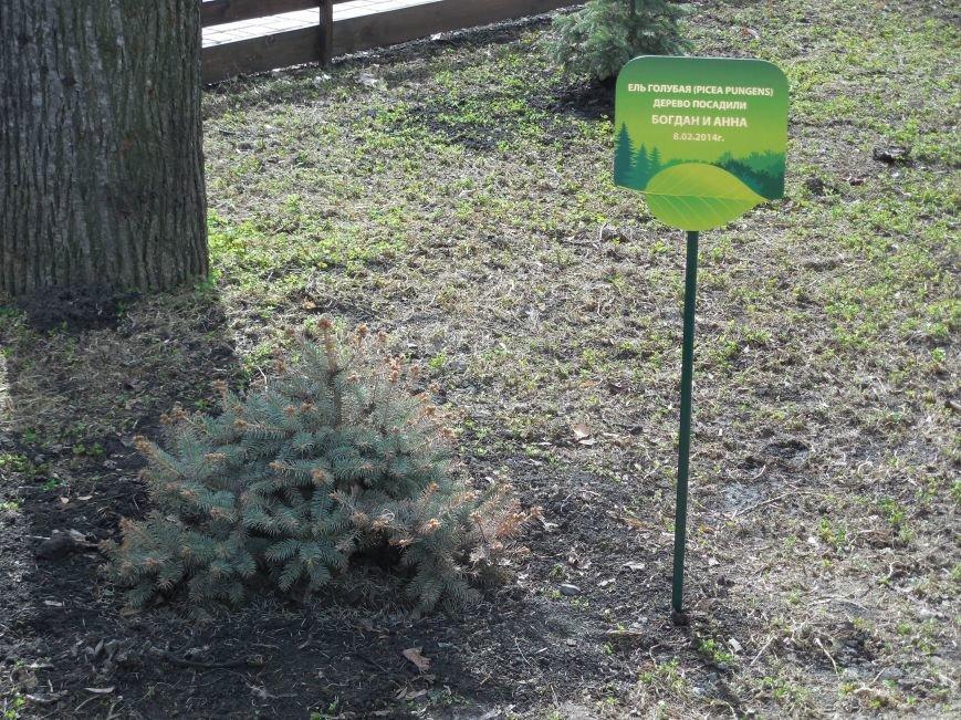 Make tree's, not war: в парке Горького высадили магнолии и миндаль, фото-8