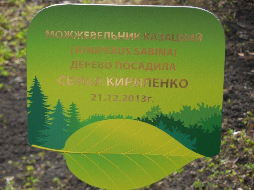 Make tree's, not war: в парке Горького высадили магнолии и миндаль, фото-9