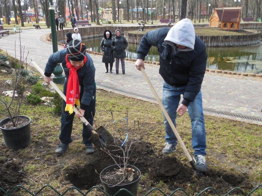 Make tree's, not war: в парке Горького высадили магнолии и миндаль, фото-5