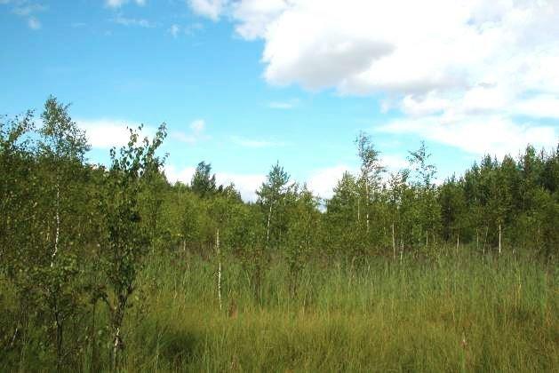Кондакопшинское болото Пушкинского района
