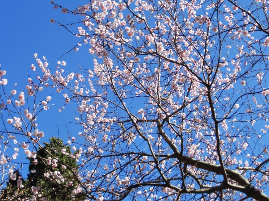 Ялтинская весна: все цвета хороши - 2 (ФОТО), фото-1