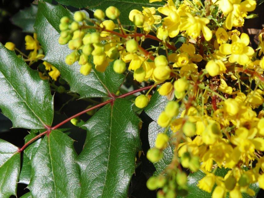Ялтинская весна: все цвета хороши - 2 (ФОТО), фото-3
