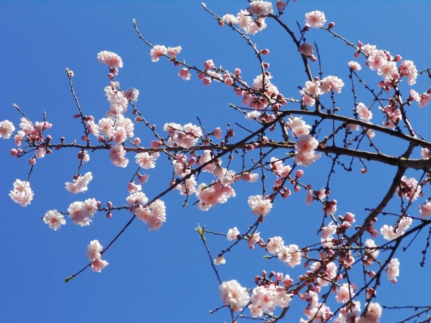 Ялтинская весна: все цвета хороши - 2 (ФОТО), фото-8
