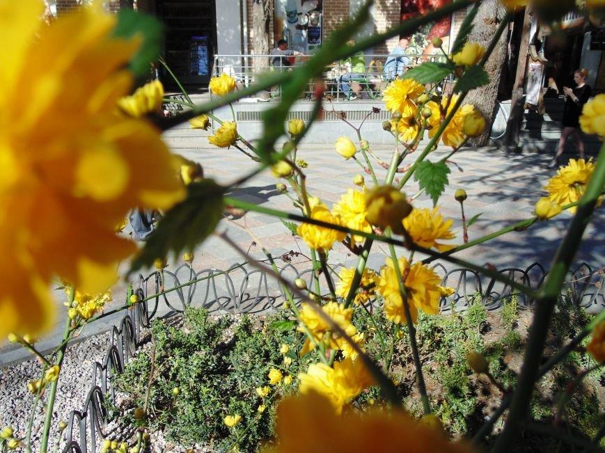 Ялтинская весна: все цвета хороши - 2 (ФОТО), фото-10