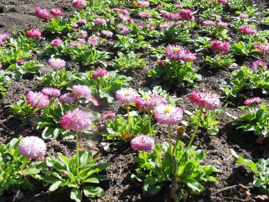 Ялтинская весна: все цвета хороши - 2 (ФОТО), фото-7