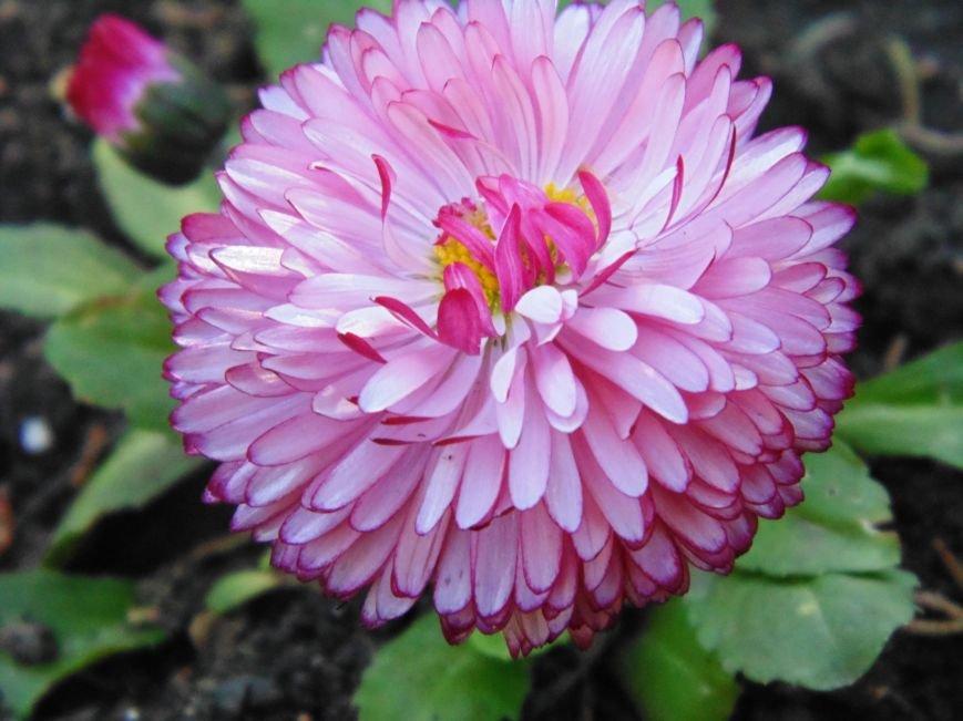 Ялтинская весна: все цвета хороши - 2 (ФОТО), фото-6