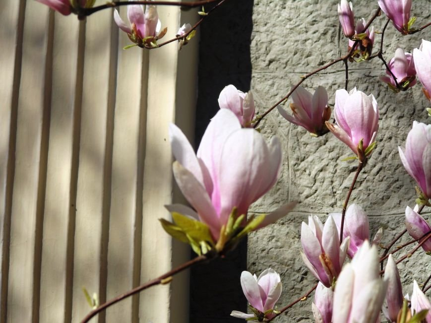 Ялтинская весна: все цвета хороши - 2 (ФОТО), фото-5