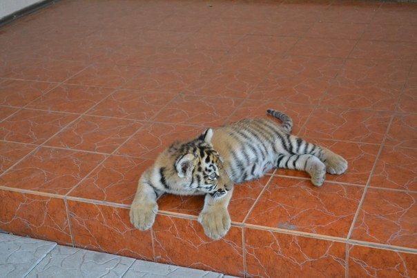 Звери в Мариупольском зоопарке не голодают, фото-3