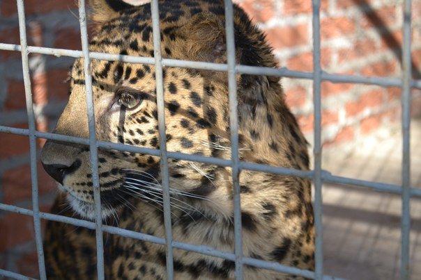 Звери в Мариупольском зоопарке не голодают, фото-2
