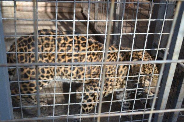 Звери в Мариупольском зоопарке не голодают, фото-4