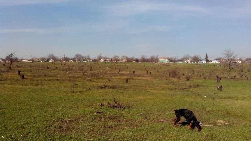 В Мариуполе неизвестные вырубили сотни деревьев (Фотофакт), фото-1