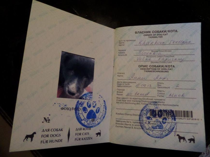 Настоящее чудо! Слепого щенка из Мариуполя спасла жительница Чехии (ФОТО), фото-4