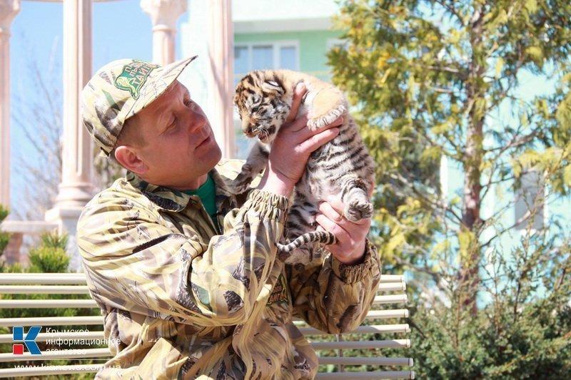 Родившегося в крымском сафари-парке тигренка назвали Референдумом (ФОТО), фото-1