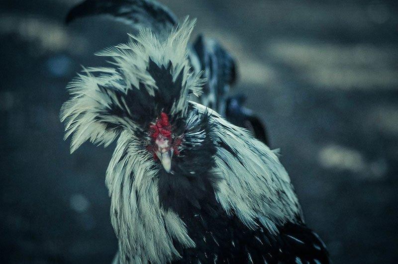 В субботу белгородцы с «птичьими» фамилиями могут бесплатно сходить в зоопарк, фото-3