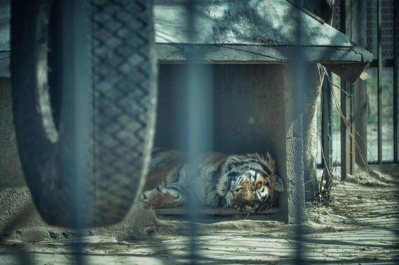 В субботу белгородцы с «птичьими» фамилиями могут бесплатно сходить в зоопарк, фото-10