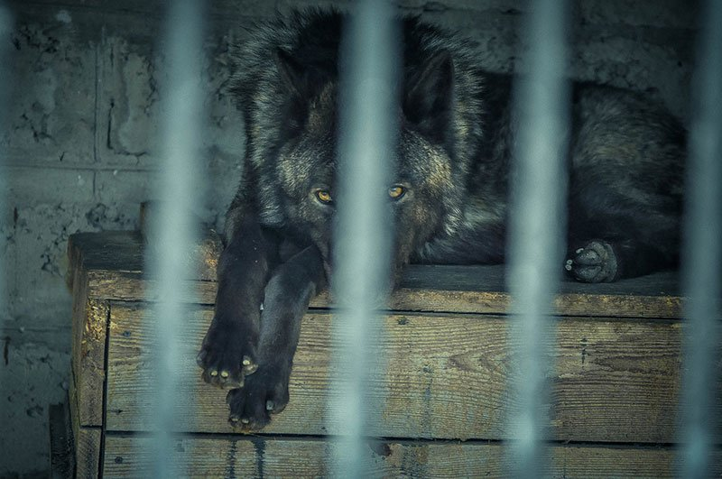 В субботу белгородцы с «птичьими» фамилиями могут бесплатно сходить в зоопарк, фото-8