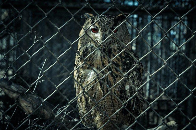 В субботу белгородцы с «птичьими» фамилиями могут бесплатно сходить в зоопарк, фото-5