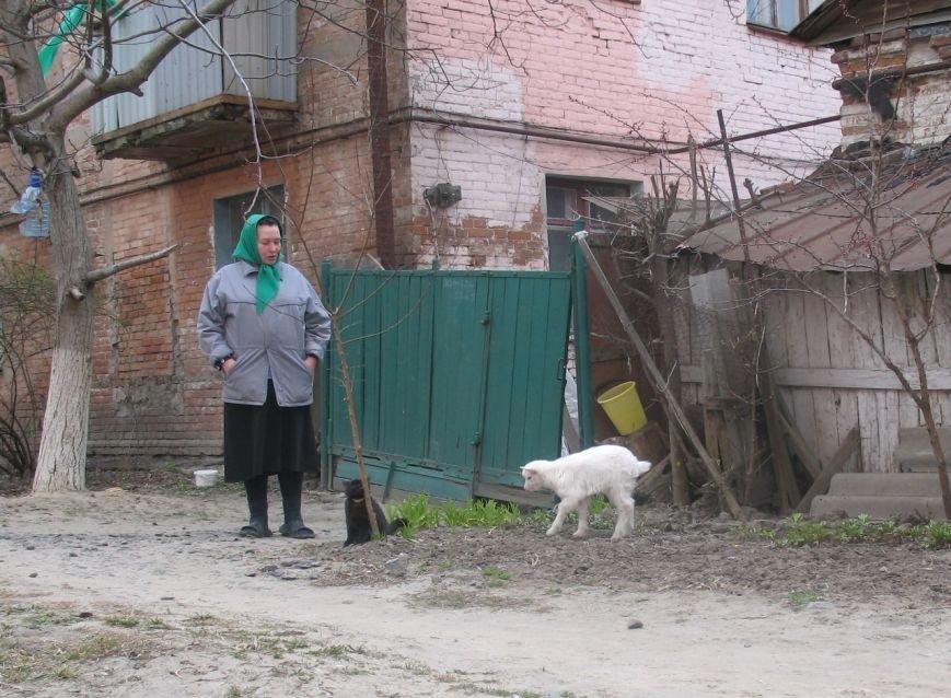 У самому центрі Полтави живе козеня (Фото), фото-1