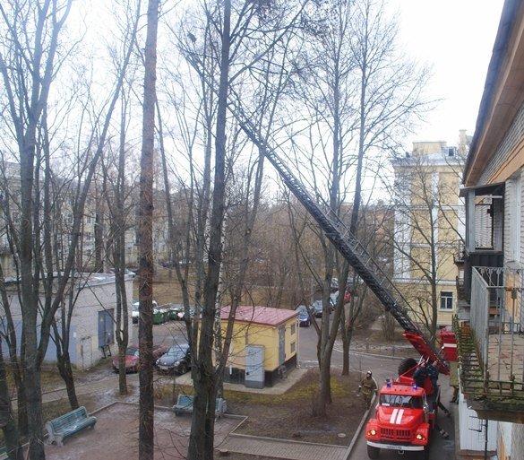 пожарные спасли кошку, город Пушкин, Царское Село