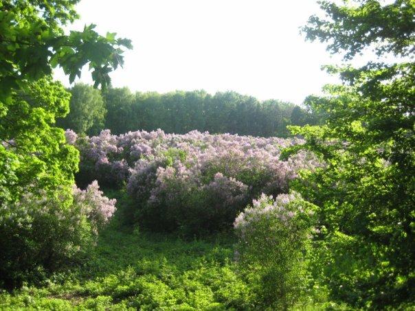 Свято Бузковому гаю у Диканці відбудеться 9 травня (Фото), фото-1
