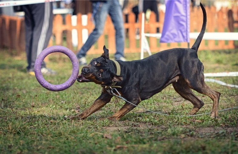В Чернигове пройдет чемпионат для собак, фото-4