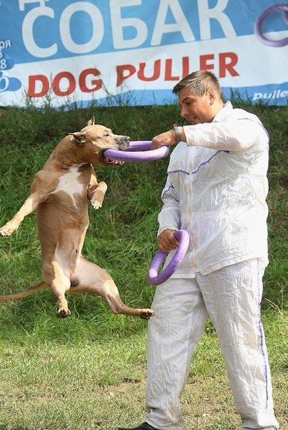 В Чернигове пройдет чемпионат для собак, фото-1