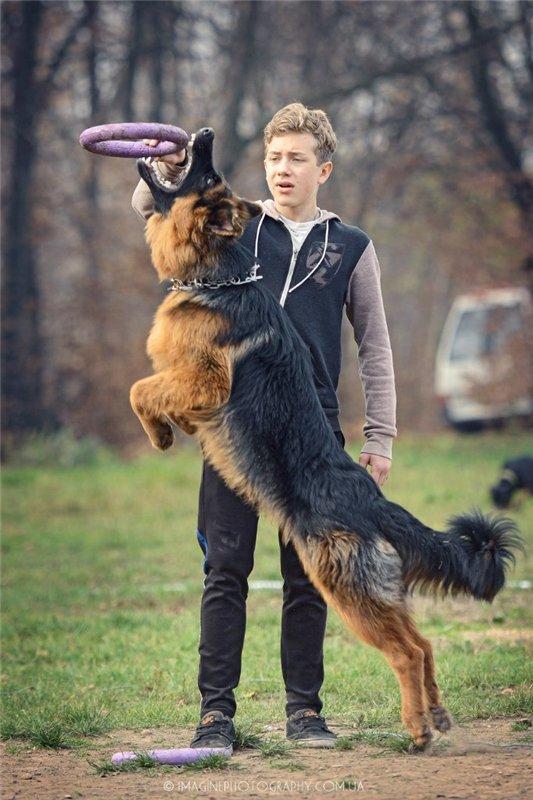 В Чернигове пройдет чемпионат для собак, фото-6