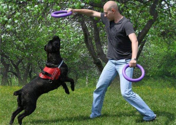 В Чернигове пройдет чемпионат для собак, фото-5