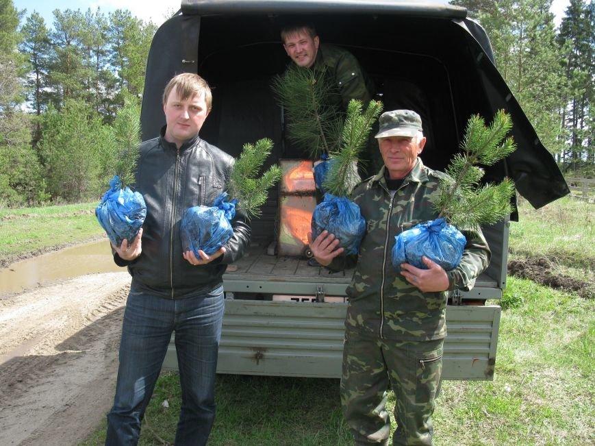 В Ульяновской области будут расти деревья ценных лесных пород, фото-1