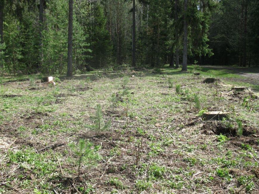 В Ульяновской области будут расти деревья ценных лесных пород, фото-2