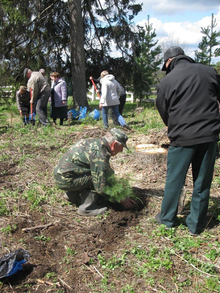 В Ульяновской области будут расти деревья ценных лесных пород, фото-3