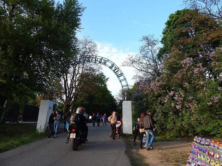 На святі бузкового гаю у Диканці вивісили величезний прапор України (Фотозвіт), фото-11