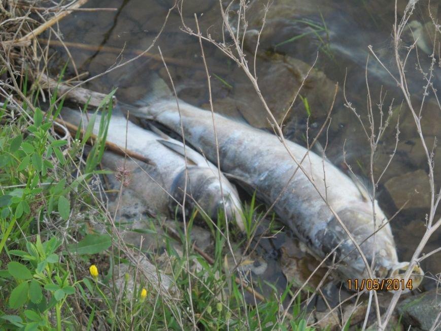В Володарском районе в ставке  погибла рыба (ФОТО), фото-5