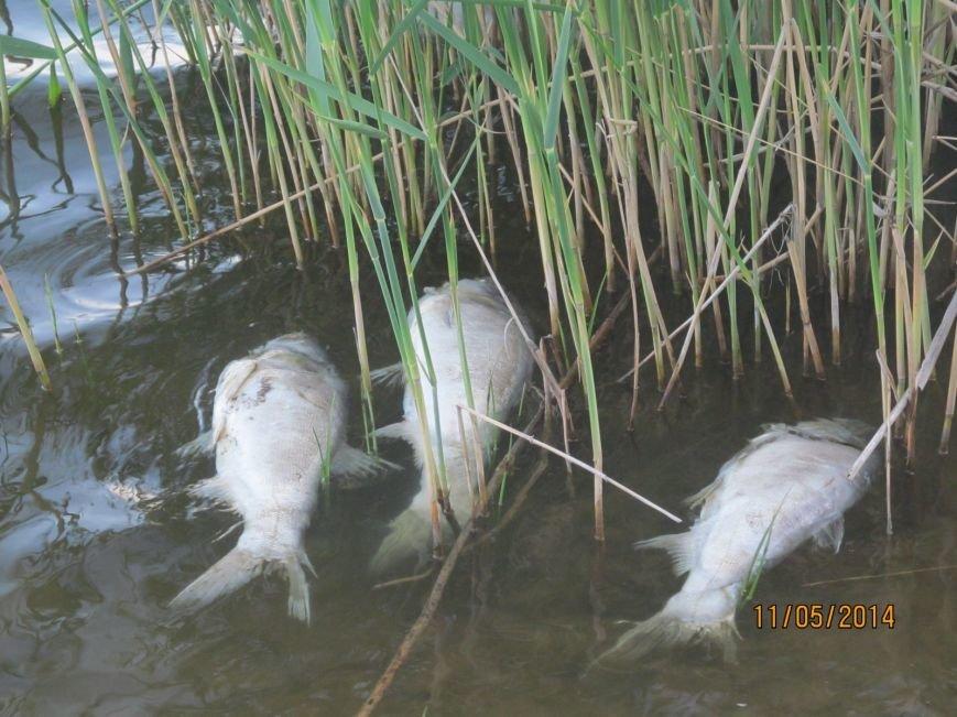 В Володарском районе в ставке  погибла рыба (ФОТО), фото-3