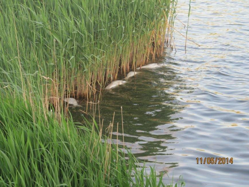 В Володарском районе в ставке  погибла рыба (ФОТО), фото-6